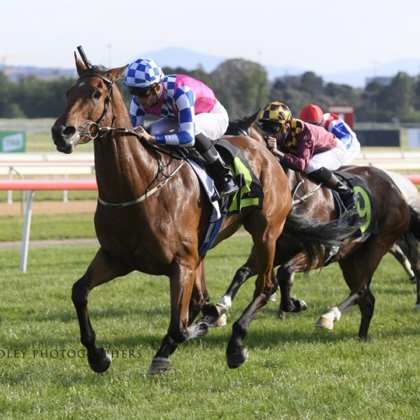 Dale's Cup Day Winner